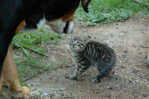 cat-245750_1920