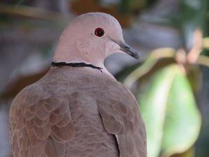 pigeon-1047914_1280
